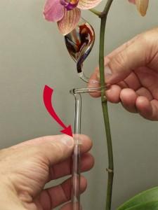 Längenverstellbarer Orchideenhalter